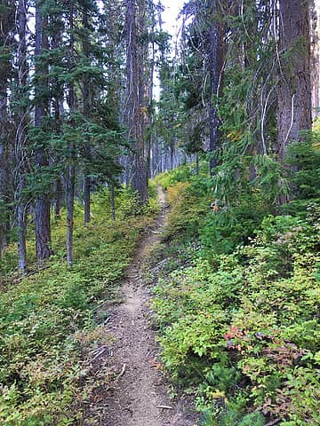 Typical forest trail in the midsection.