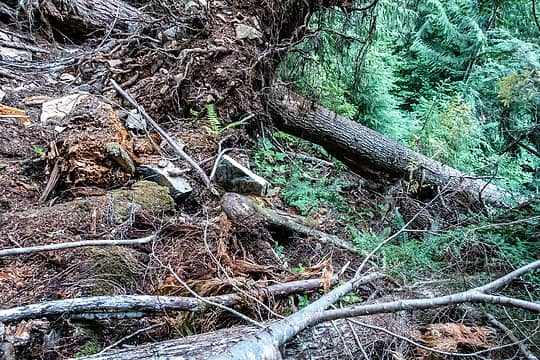 """""""route"""" around the big blowdown goes downhill and under the log!"""
