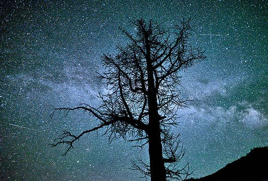 Larch and Milky Way in the North Cascades