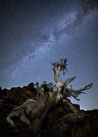 Dragon Tree with Milky Way
