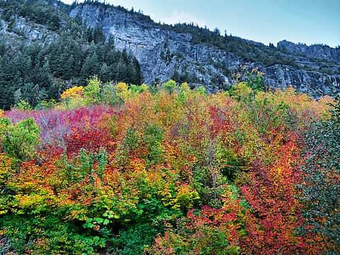 Fall foliage WSR