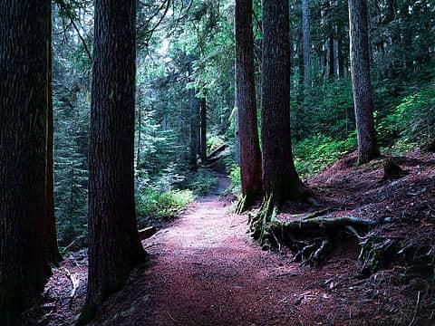 Trail to Lake George