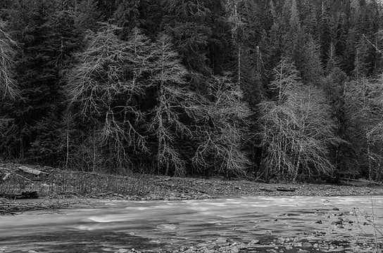 East Fork Quinault River, March 2014