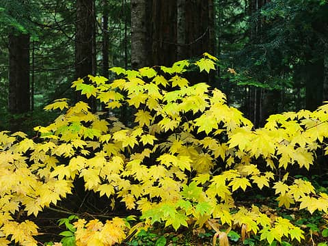 Fall colors2