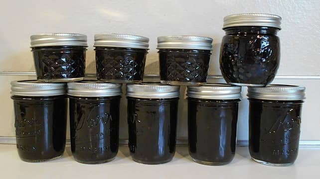 wild blackberry (r. laciniatus) jam 09/16/21