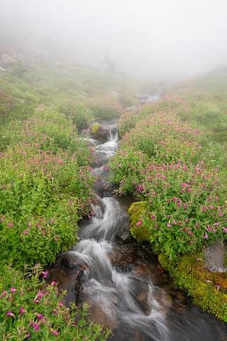 Flowers alongside a stream