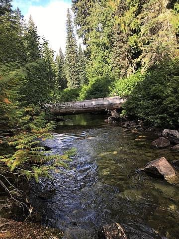 log crossing to original Frosty creek trail